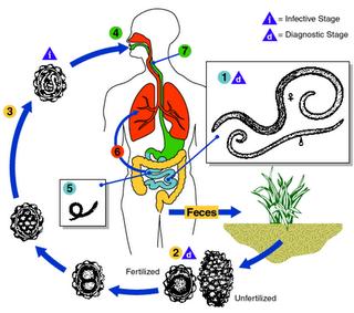 milyen parazitak vannak az emberi testben