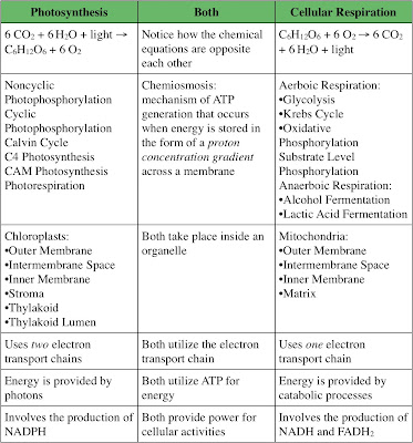 the relationship of cellular respiration and photosynthesis similarities