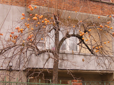 Yambol Fruit Tree in December