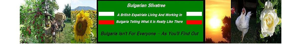 Bulgarian Slivatree - An Expatriate's Eye in Bulgaria