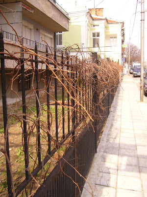 Grapevine Garden Fences in Yambol