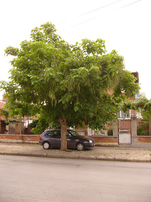 A Yambol Tree Covered Car Park