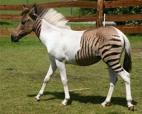 Khushifairy: Weird Hybrid