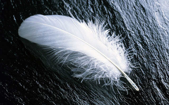 Natur Wallpaper : Landscape White Feather