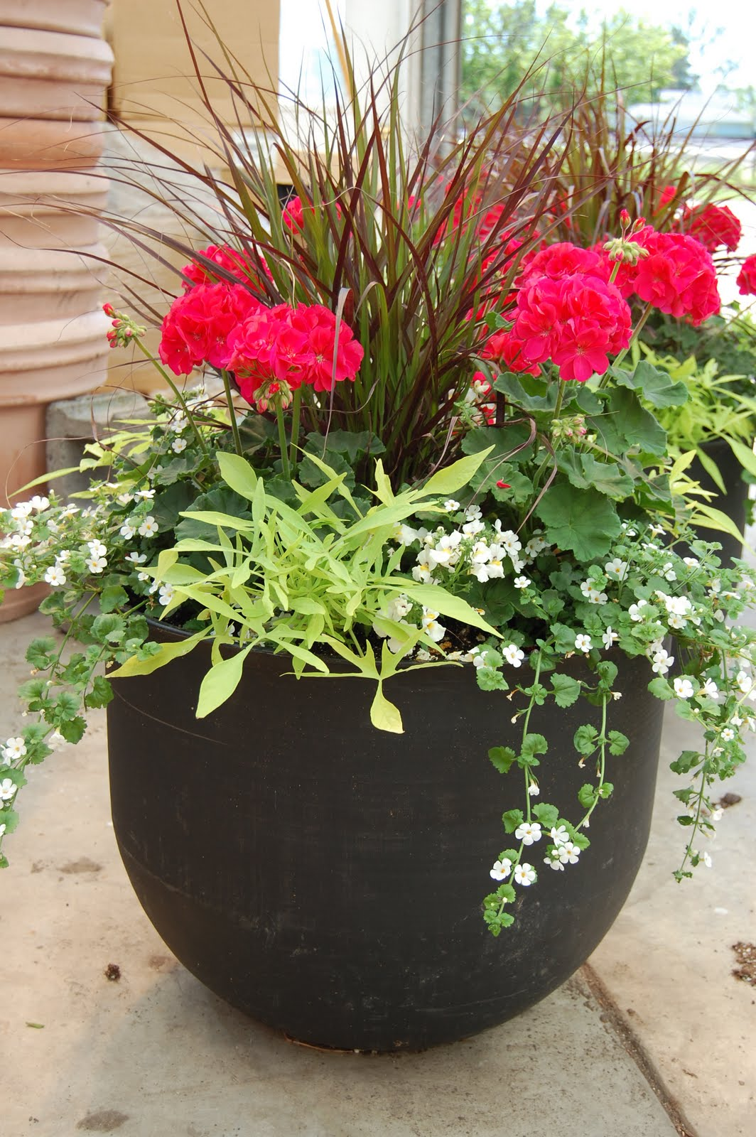 Best container plants flowers for Small flower pot ideas