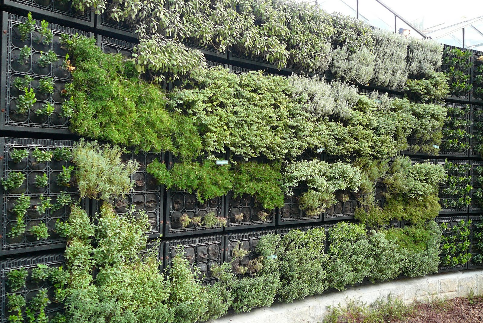 Herb Wall Morgan Creek Chronicles Atlanta Botanical Garden Acga Part 2