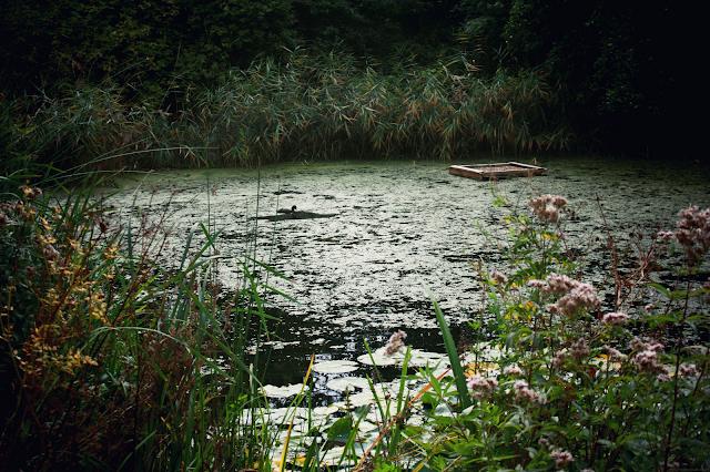 Parc naturel de Camley Street - Londres