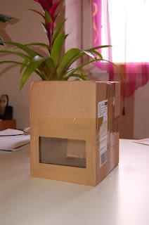 le blog des ratons comment attraper une souris. Black Bedroom Furniture Sets. Home Design Ideas