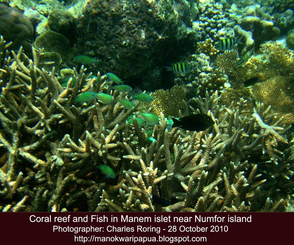Raja Ampat Reef: 2010