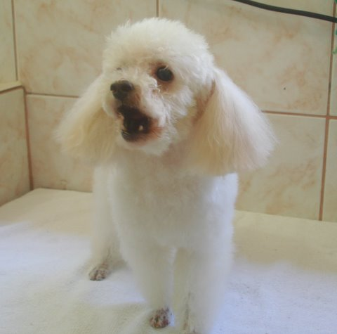 http://animaldeestimacao-amor.blogspot.com/