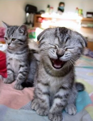 Dos gatos riendose Two cats laughing