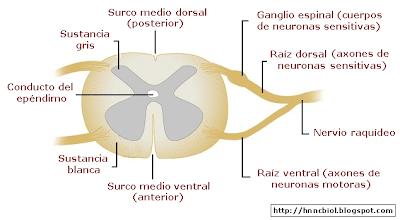 Ciencias Biologicas Anatomia Y Fisiologia Del Sistema