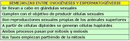 OVOGENESIS PDF ESPERMATOGENESIS Y