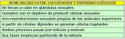 semejanzas entre ovogénesis y espermatogénesis