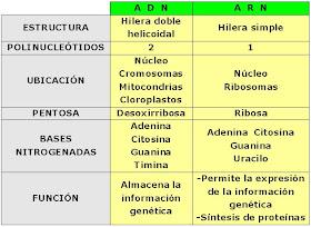 Aprende A Diferenciar Las Moleculas Del Adn Y Arn Historia