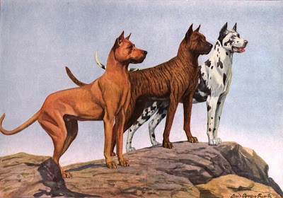 Dogs Great Danes