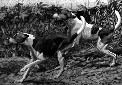 The English and American Foxhound