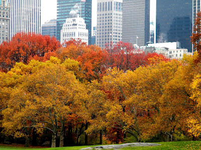 Autumn Colors and New York City Skyline