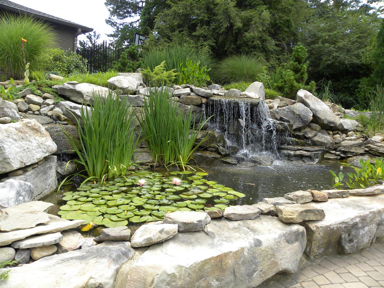 Regina's Garden: Koi Pond Tour (Pond 15)