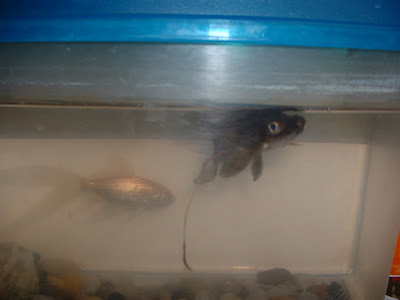 Backpedaling: In Memory of Squeek The Fish 2008-2009 - photo#11