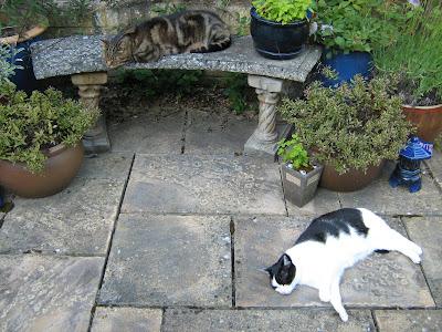 Snoozy cats