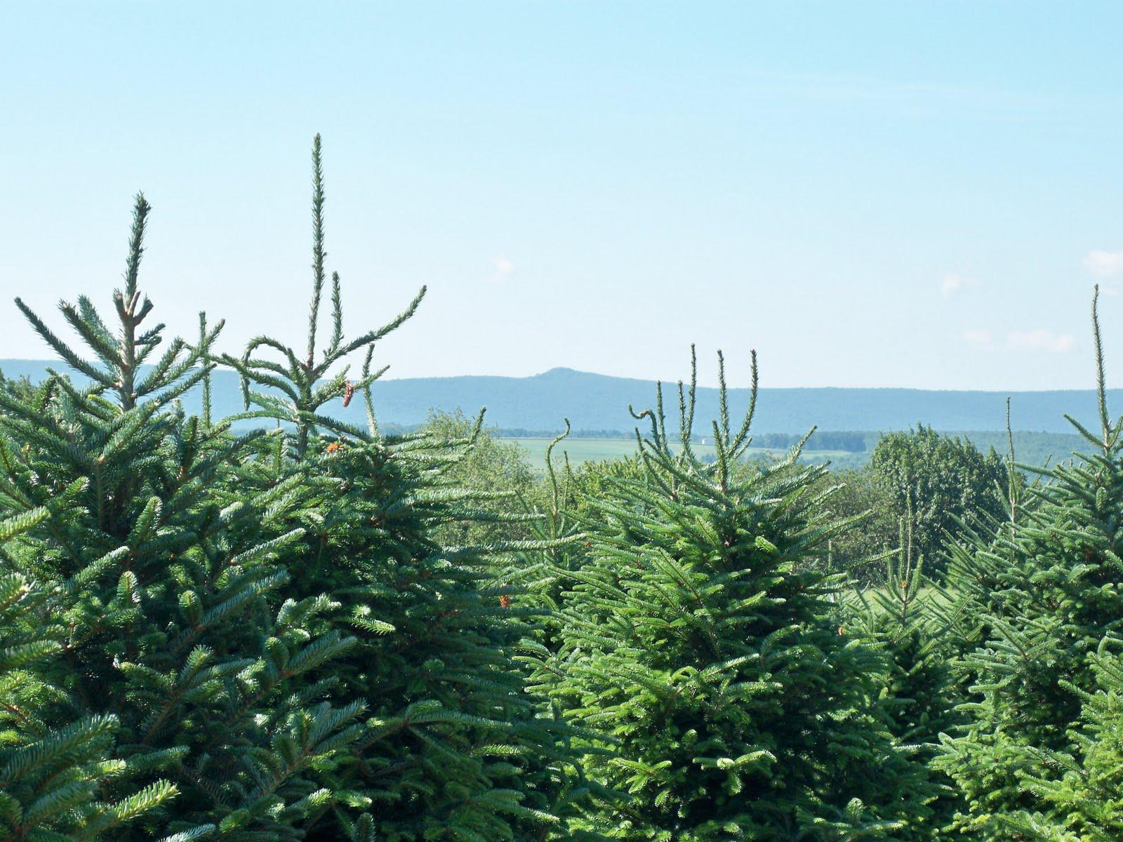 Balsam hill christmas trees 70 off myideasbedroom com