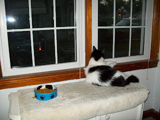 cats like to look out the windows