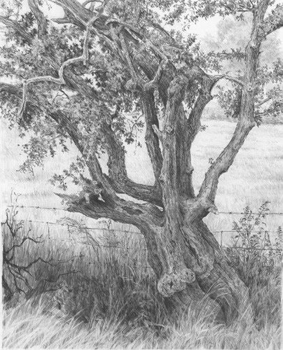 How To Sketch Trees, Step by Step, Landscapes, Landmarks ... |Tree Landscape Drawing