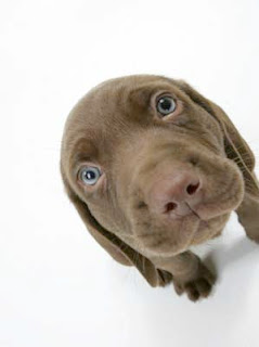 Funny Dog names, hilarious dog names, dog names,: Funny Dog names