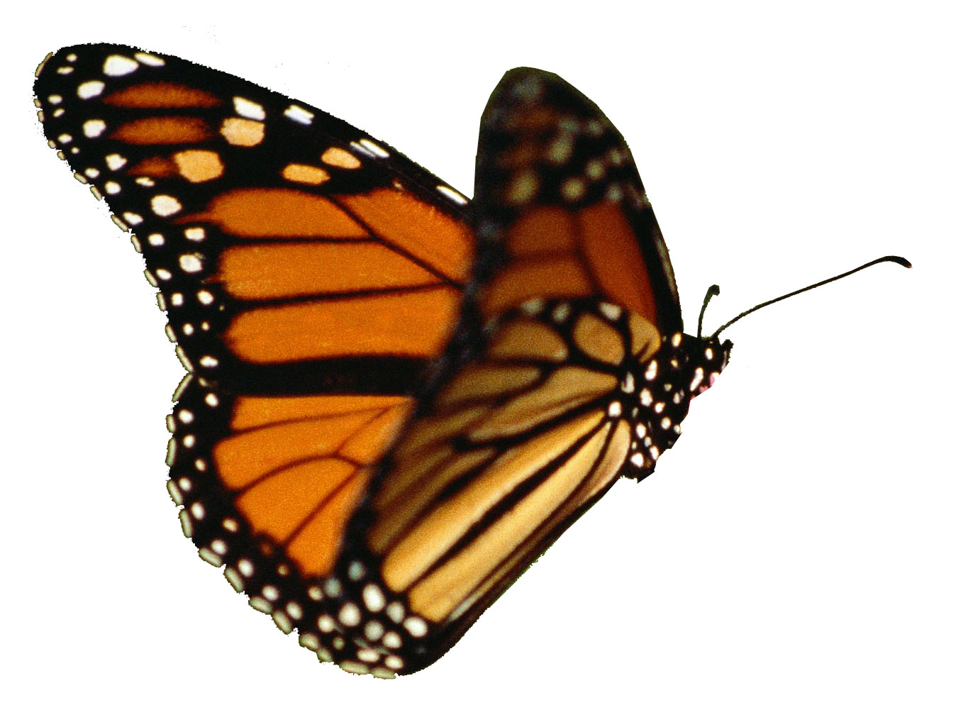 Butterfly Pict