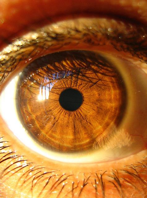 Brown Eye Makeup Tutorial: Eye Colors: December 2010