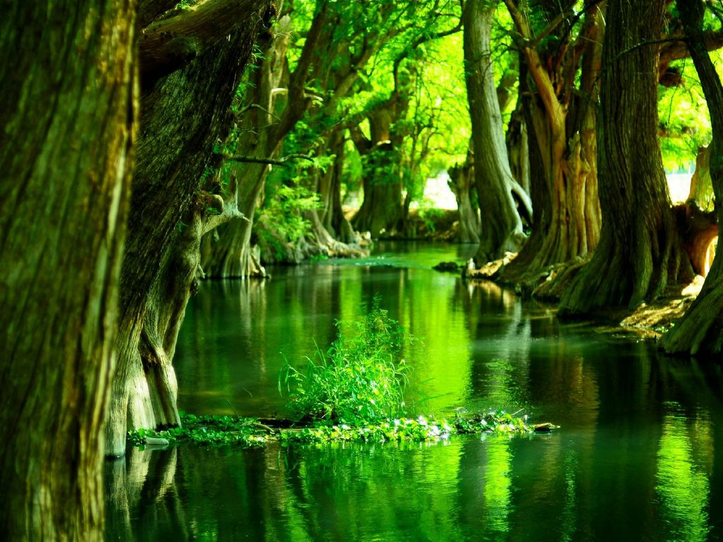 Ewallpics 30 amazing forest wallpapers 1024x768 - Wallpaper 1024x768 ...