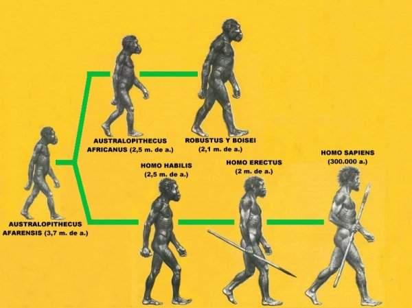 Milenioscopio Arbol Genealógico De La Evolución Humana