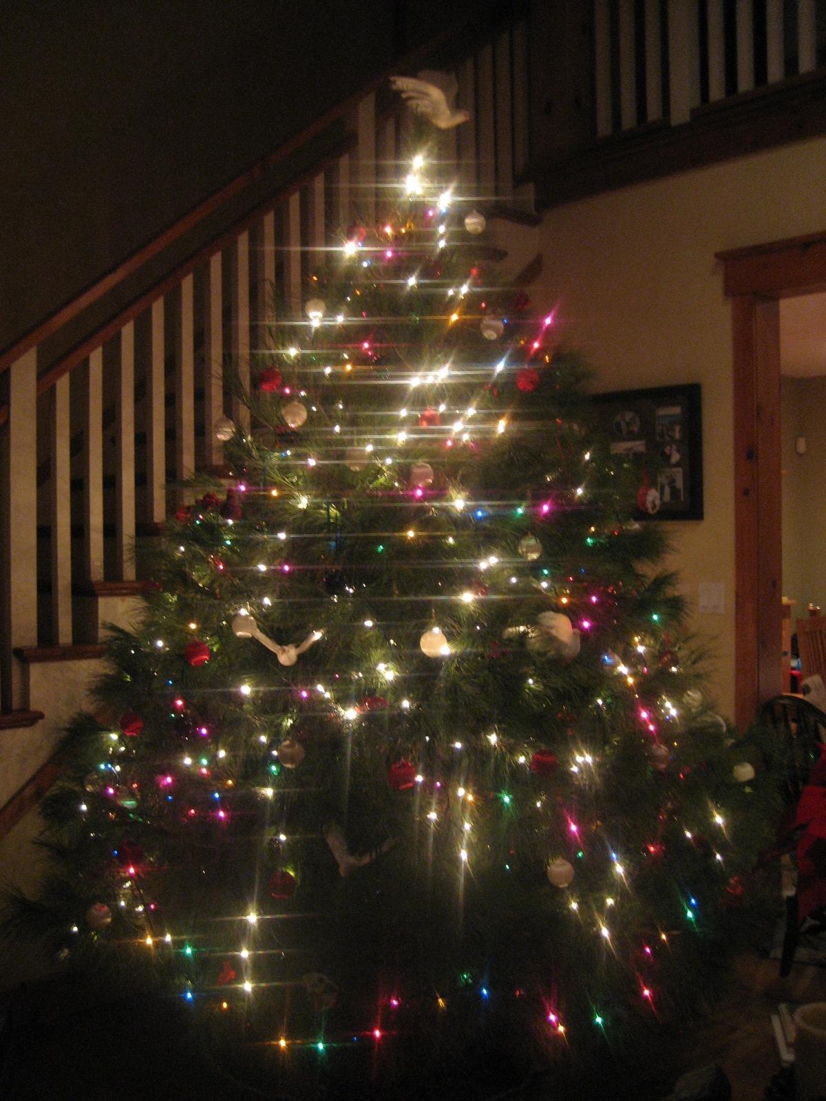 Jen Melanson: The biggest Christmas tree ever!