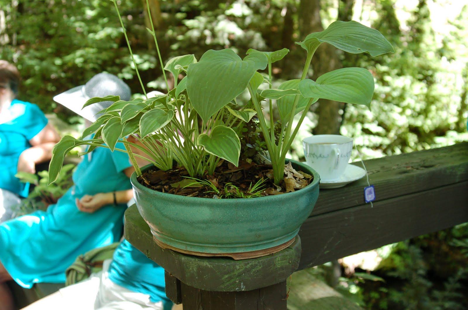 Garden Walk Garden Talk: Bwisegardening: A Pot Of Tea, A Garden Walk, A Plant