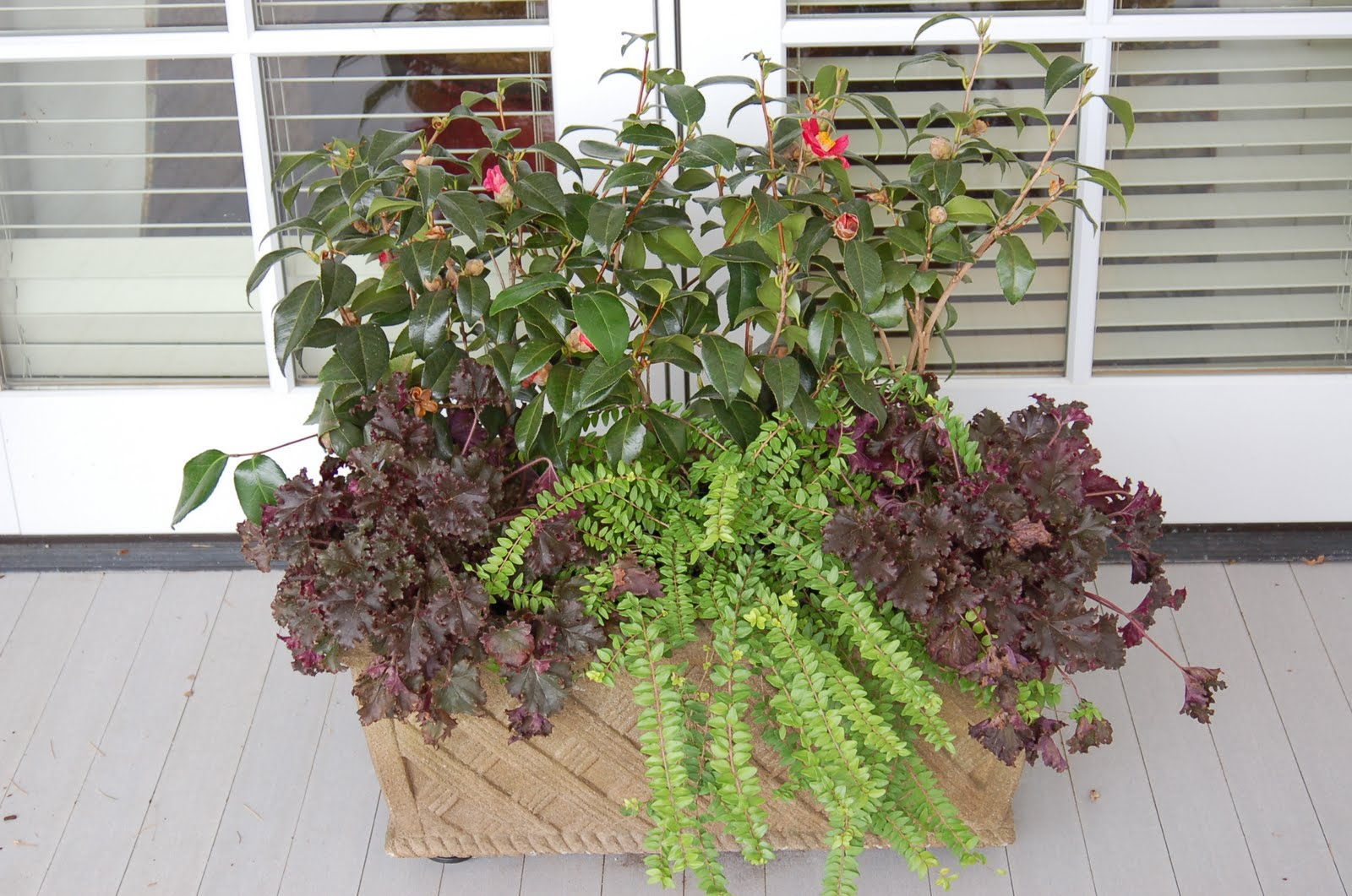 bwisegardening day 2 a shade loving option for winter containers