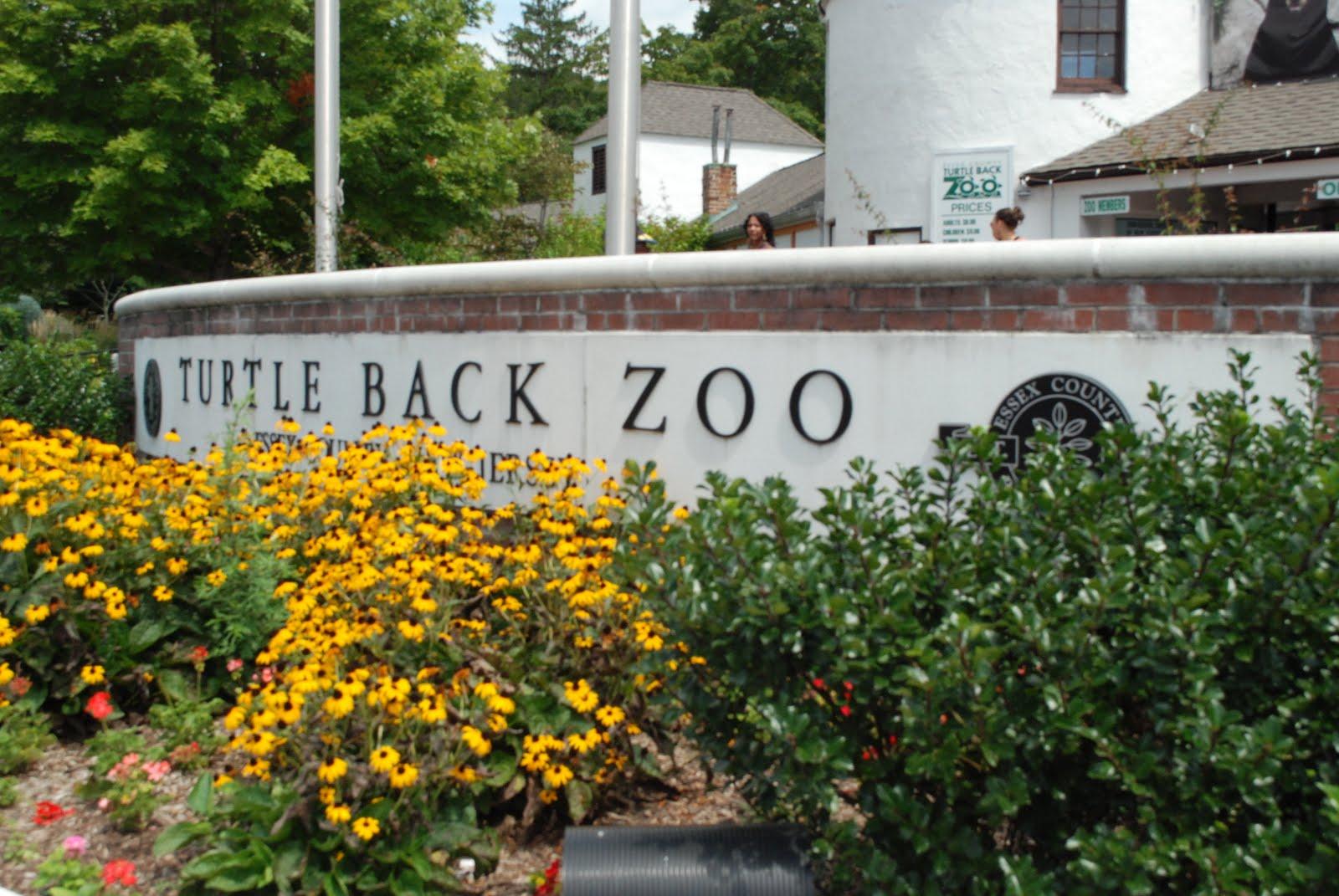 Margaret Montet Turtle Back Zoo