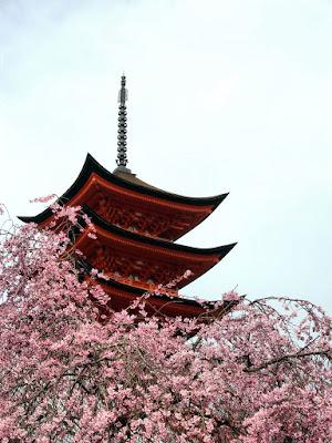 Cherry blossoms at Miyajima