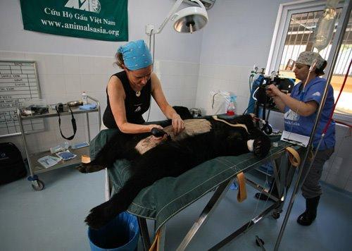 Bear Rescue Center Vietnam