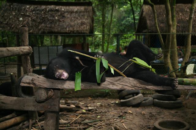 Bear Rescue Center Laos