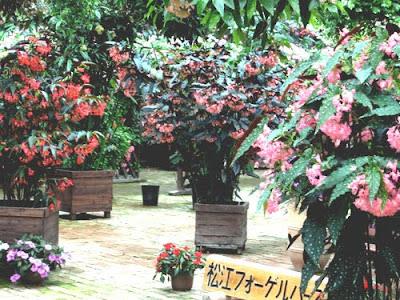 Kachoen Matsue Vogelpark