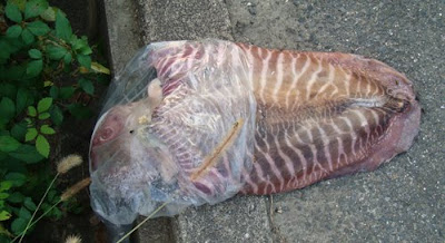 Giant Squid On The Sidewalk