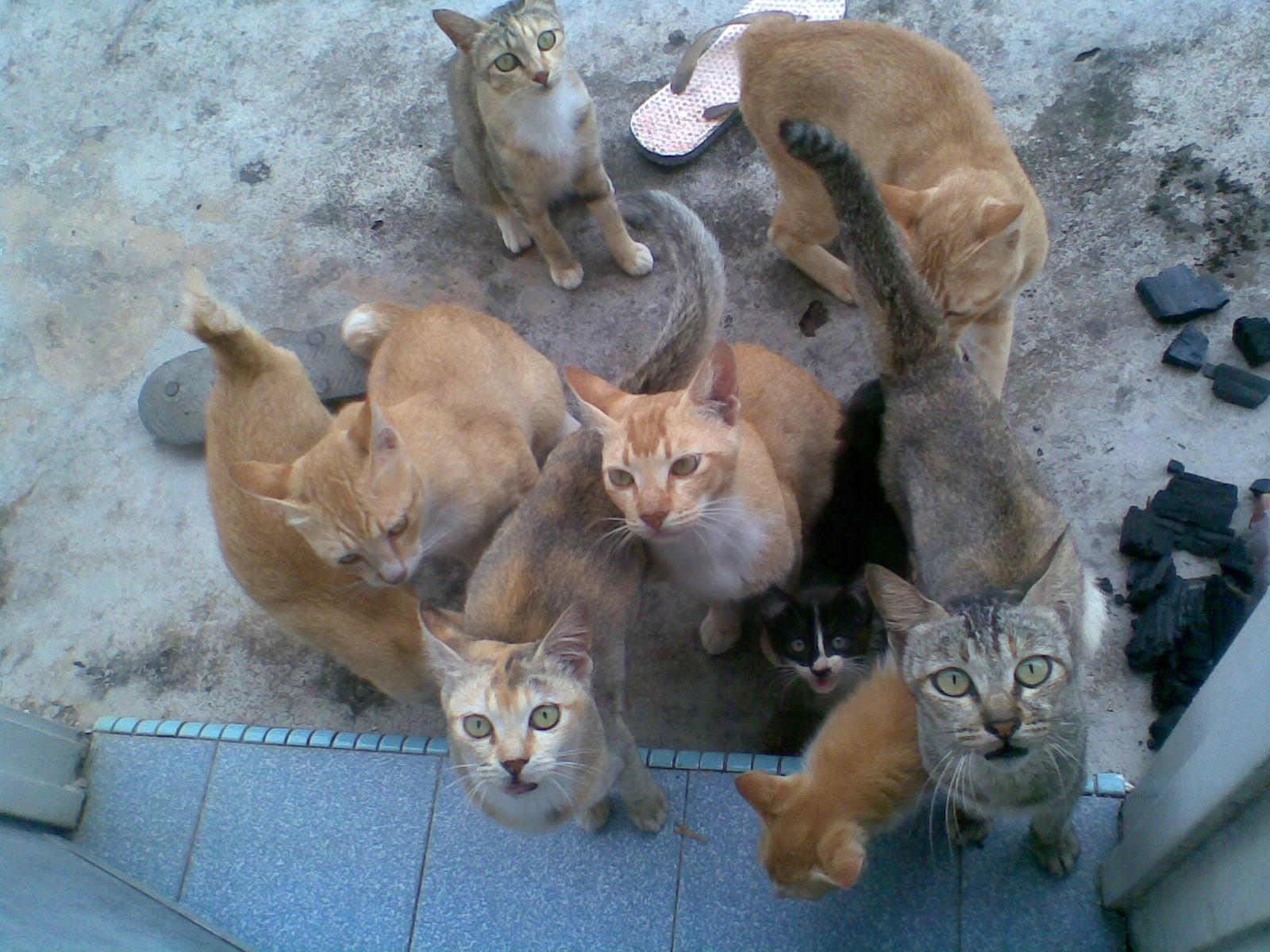 Gambar Kucing Romantik Kumpulan Gambar Dan Foto