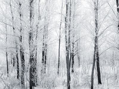 Snowy February | The Roger Tory Peterson Institute of ... |Winter Forest Black And White