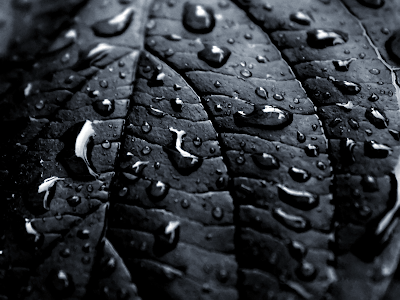 Unduh 45+ Wallpaper Black Rain HD Terbaru