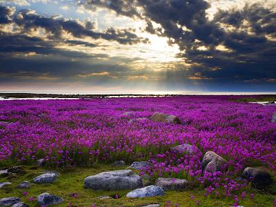 wild flowers, landscape