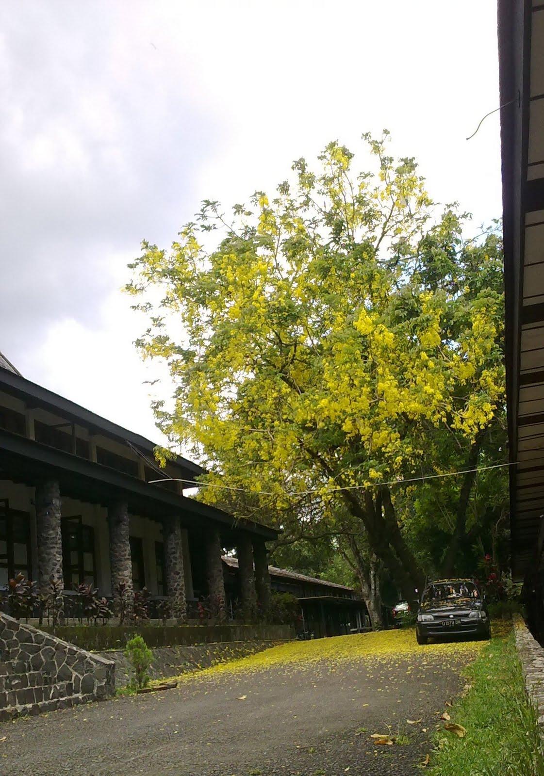 https://i2.wp.com/3.bp.blogspot.com/_Ug9sb9IJXvA/S-ICDBOa5UI/AAAAAAAAAQ8/oK0TuM8OElg/s1600/falls+yellow+tree.jpg