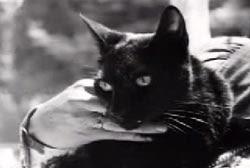القطة نوفا