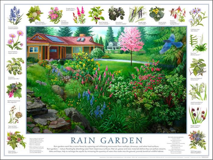 Rain Garden Design Examples Perfect Home and Garden Design