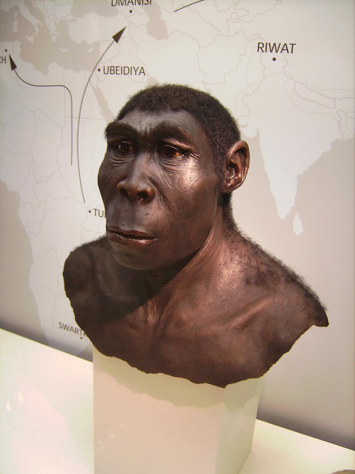 What it means to be a human: Homo erectus